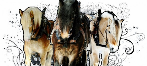 hästlogo3 (2) (640x307)