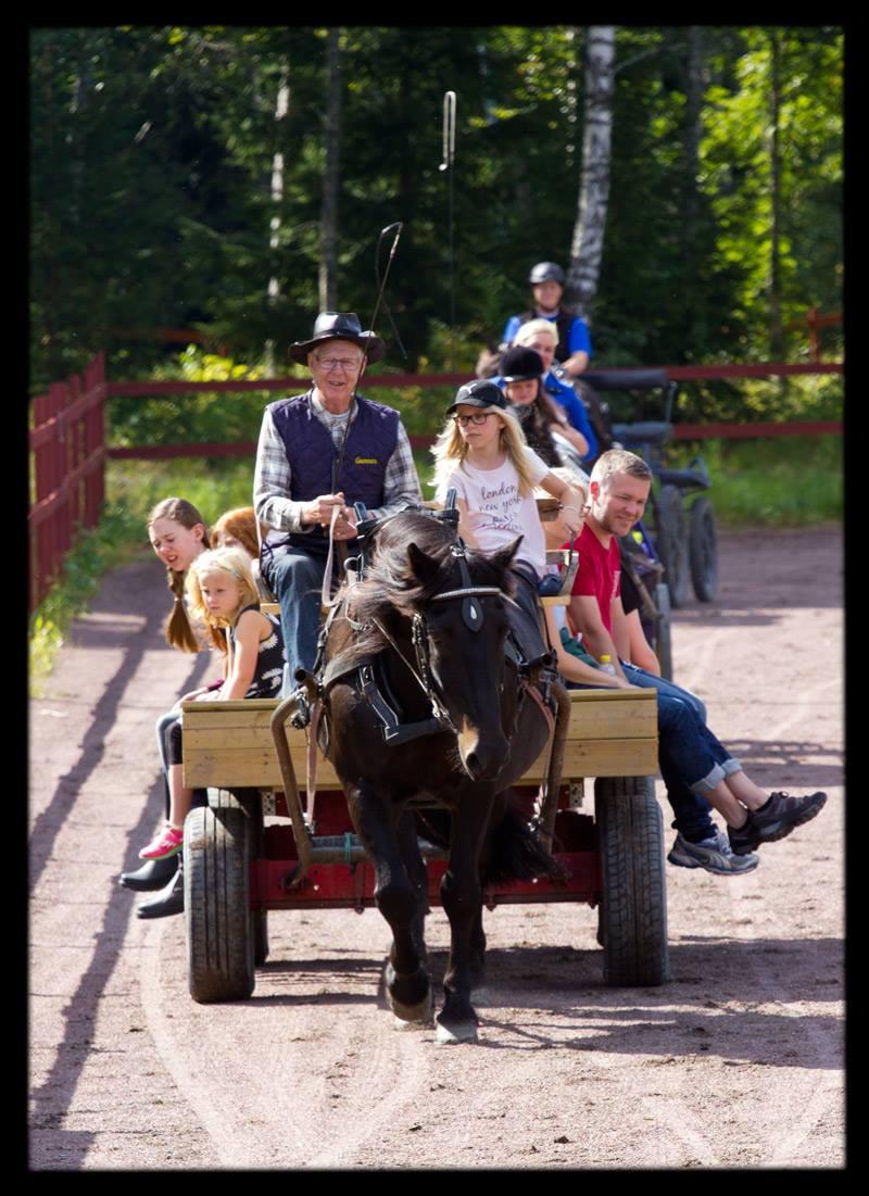 Åkning med häst och vagn