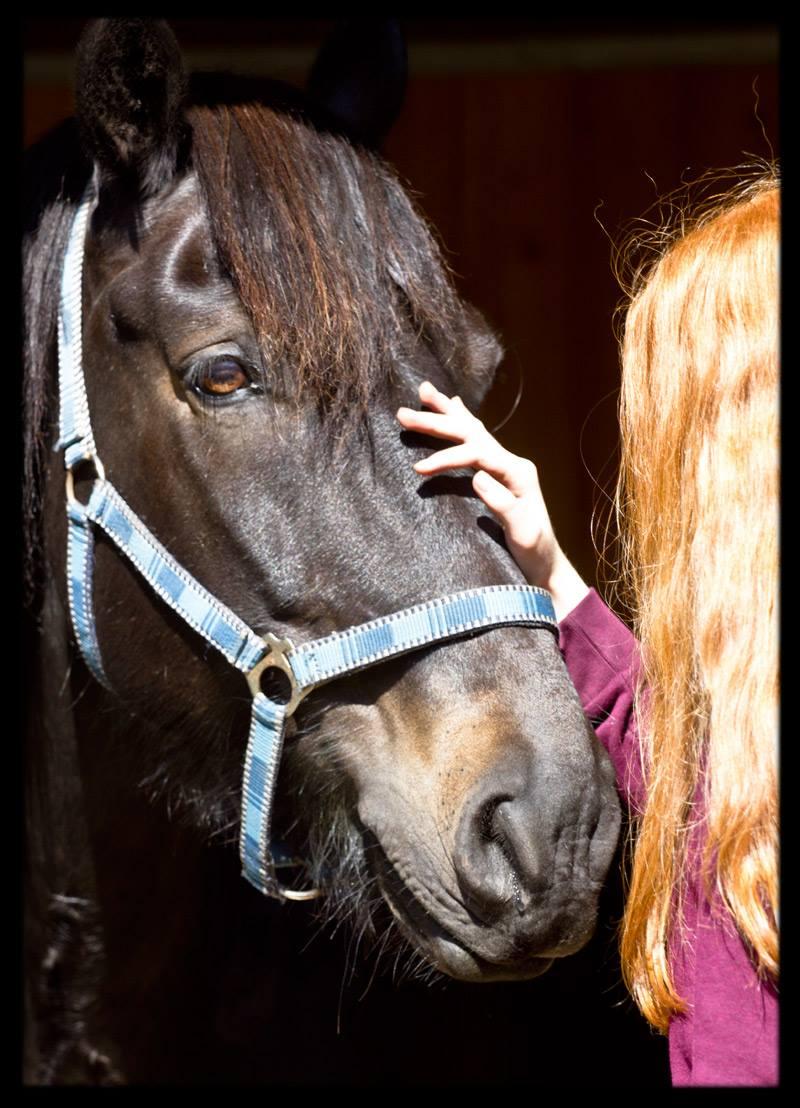 Hästar är underbara djur